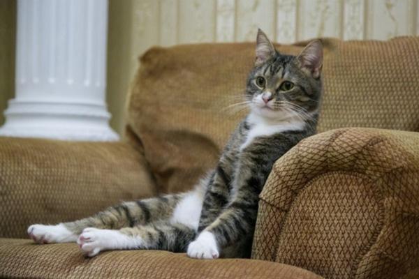 Кот умеет сидеть в кресле как человек