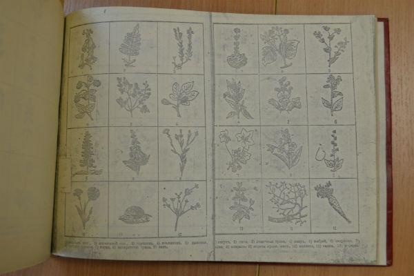 Рецепты из травника XIX века помогли многим людям