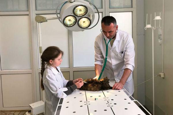 Дочка Ансара Аня на каникулах часто помогает папе и уже умеет делать животным уколы