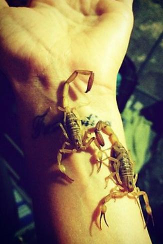 «Скорпионы по местным меркам средние! Но ядовитые!»