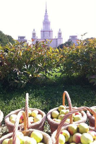 Знаменитости собрали урожай яблок