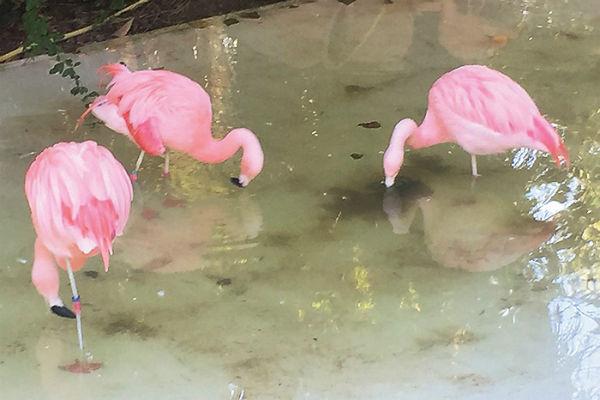 «Розовый вальс» из «Щелкунчика» получается у этих птичек особенно хорошо