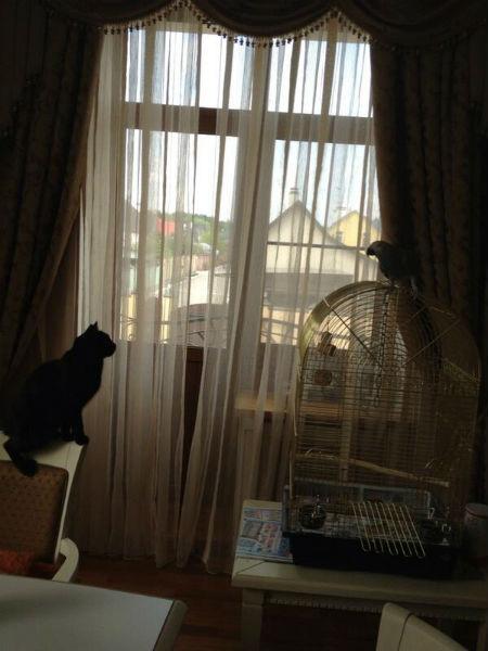 Кошка Багира предпочитает оставаться на расстоянии от новой пернатой сожительницы