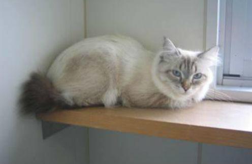Кот останется в карантине до февраля
