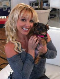 Бритни Спирс с щенком Ханной