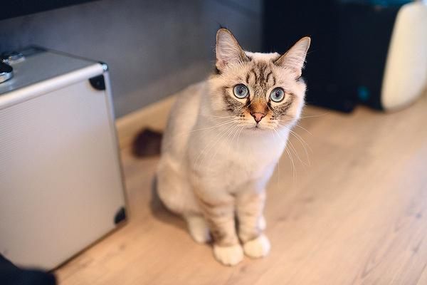 Питомца назвали в честь кота из сказок про Гарри Поттера