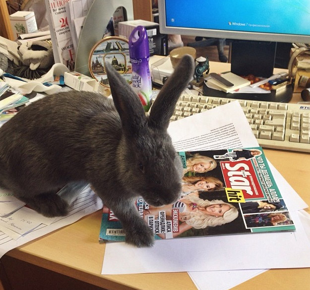 Валера Внимательно изучает все свежие номера журнала