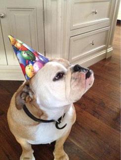 Собака Бекхэмов тоже отмечала день рождение Бруклина