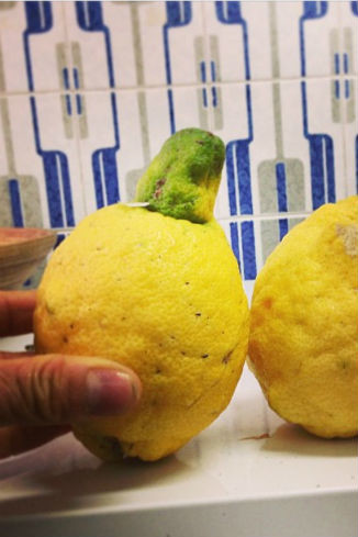 А вот такие лимоны растут у папы Корнелии