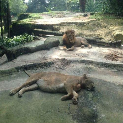 Сингапурский зоопарк