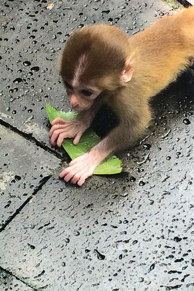 На Острове обезьян нет клеток и вольеров