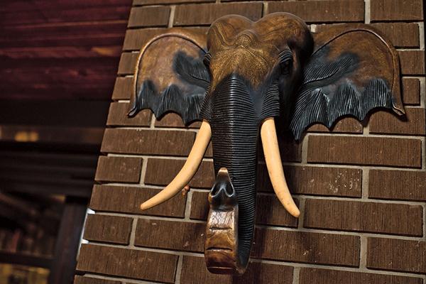 Этого слона актрисе подарил сын. Купил в Таиланде на первые заработанные деньги