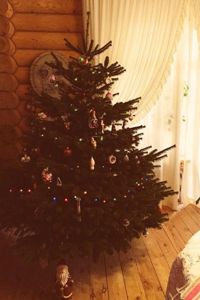 Родительская ель для Водонаевой - предмет особой гордости