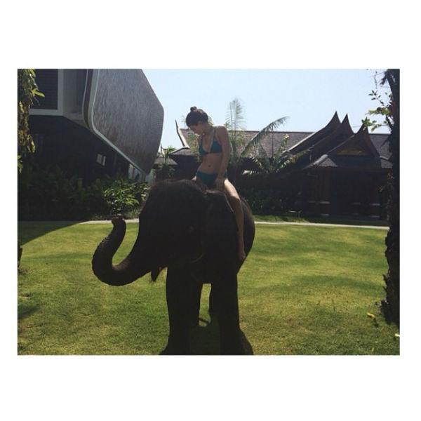 Кайли слону понравилась