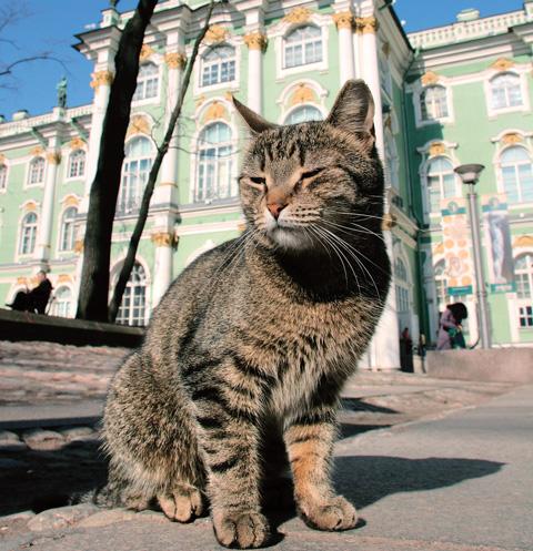 Как и сотни лет назад, основная задача котов – беречь главный музей Санкт-Петербурга от мышей и крыс