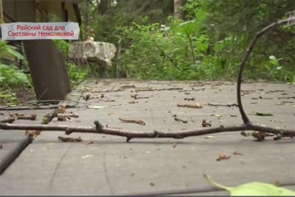 Ураган повалил вековые деревья и поломал ветки