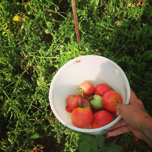 «Моя вторая работа собирать помидоры на огороде у бабушки», - пошутила Ирина