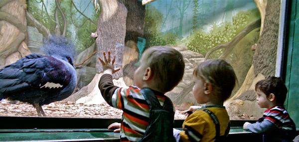В зоопарке ребятишек не оттащить от вольеров с птицами