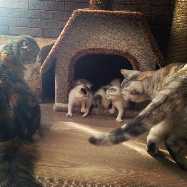 «Большая семья! Алиска, Муська и четверо новорожденных», - подписала снимок модель