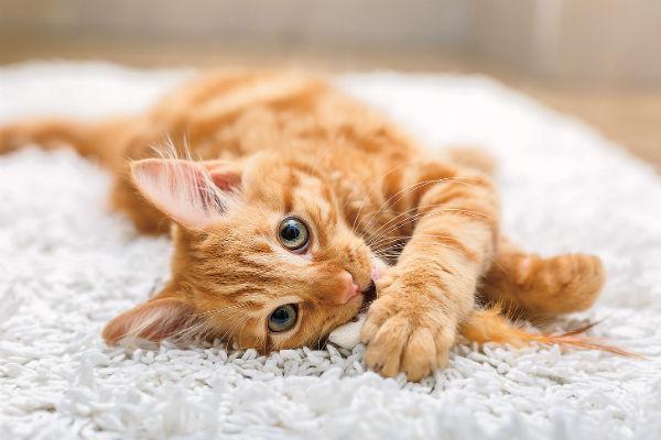 Кошки - прекрасное лекарство от грусти: погладьте зверя, и тоска уйдет