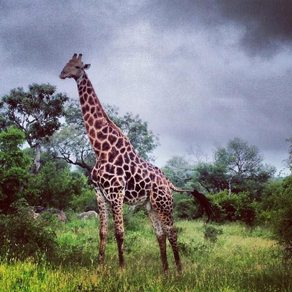 Жизнь жирафов увлекла Татьяну