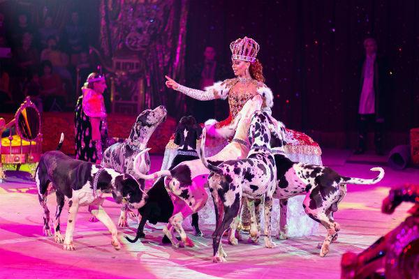 В «Королевском цирке», конечно, есть и королева
