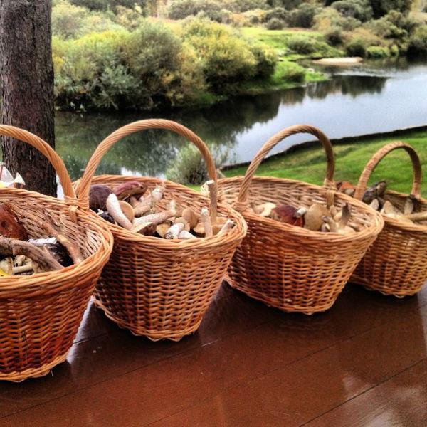 Каждая вернулась из леса с полной корзиной грибов