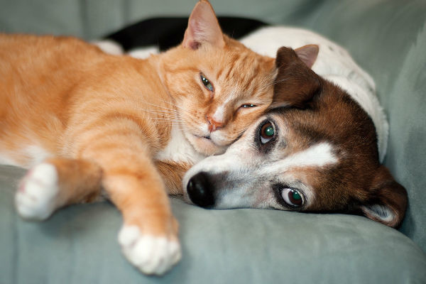 Защитите домашних животных