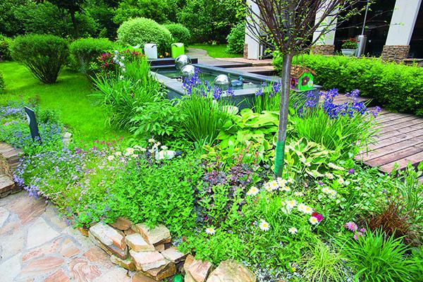 На 25 сотках Михаила Турецкого растут не только декоративные растения, но и, например, мини-огурцы