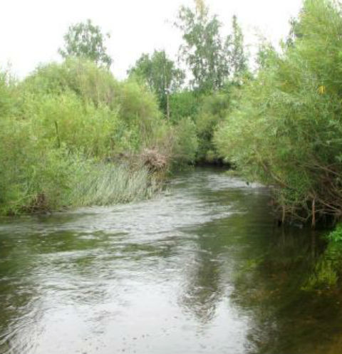 Река в районе поселка Тогузак