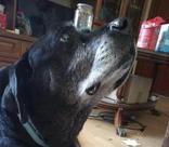 «Скулит, ест и пьет лежа»: хозяева выкинули в мусорку пожилую собаку