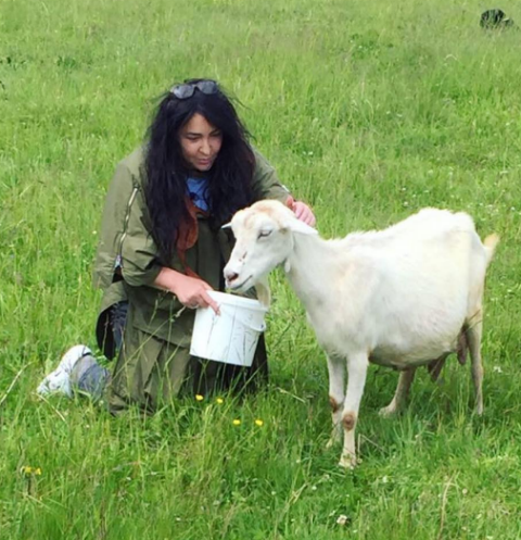 Лолита Милявская подоила козу