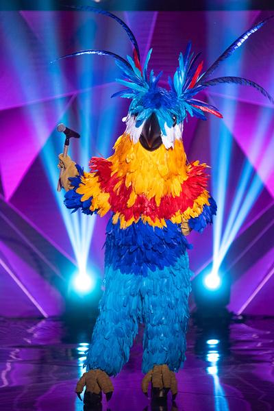 Попугай пока продолжает участие в шоу