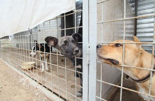 Общество: У брошенных собак появились ангелы-хранители – фото №1