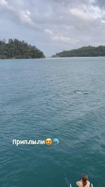 Дарья была рада увидеть дельфинов