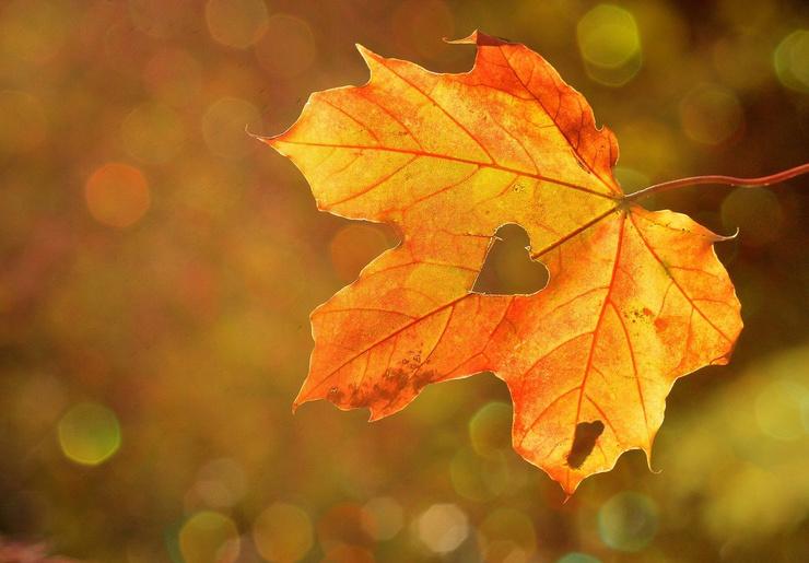Сладкий ноябрь: что обещает гороскоп