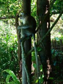 Потом обезьяна не захотела уходить