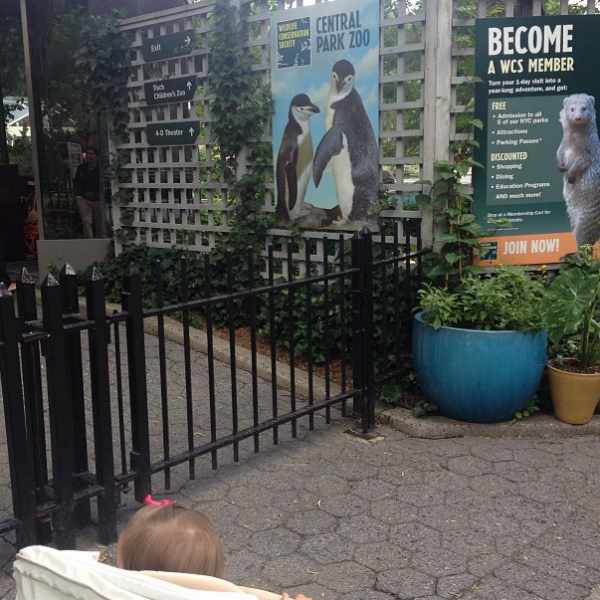 Там же звездное семейство решило заглянуть в зоопарк