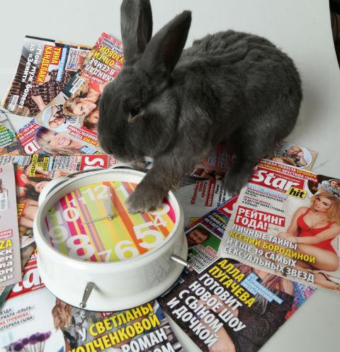 Талисман редакции «СтарХита» - кролик Валера