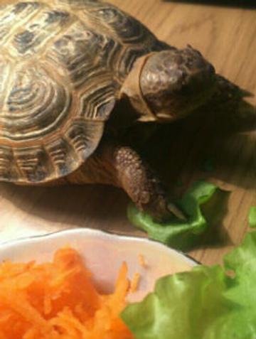 Черепаха - подарок сыну певицы