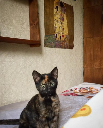 котенок Клементина