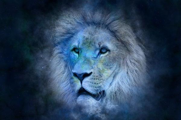 Львы «на разрыв»