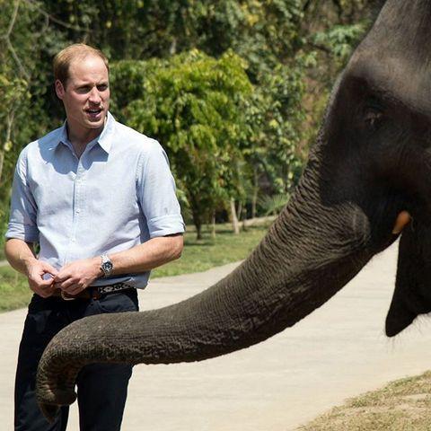 Принц Чарльз увлечен Африкой со времен университета