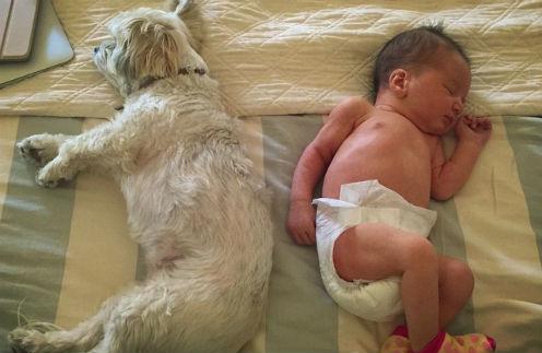 Собака по кличке Сладкая картошка и мисс Дашиэль Иден Йовович-Андерсон