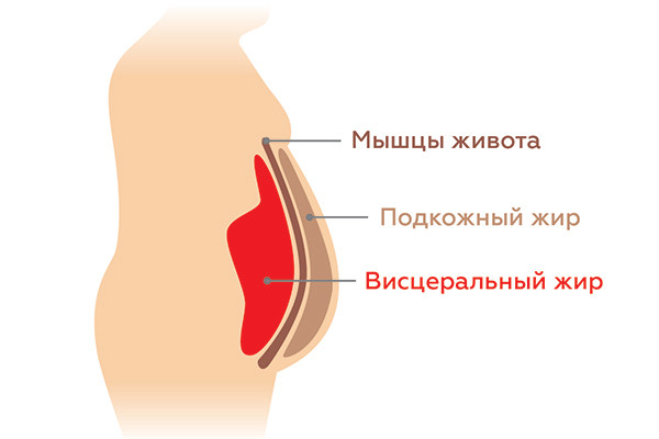 Особенности жировой прослойки