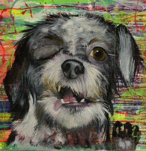 Анастасия Дубач: «Собаки не обижаются на судьбу»