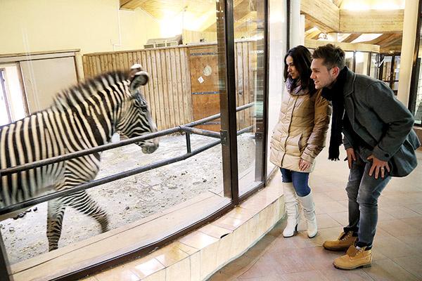 Наблюдая за зеброй, которая немного  сторонилась людей, Влад пошутил: «Похоже,  она, как и я, устала от вспышек фотокамер!»