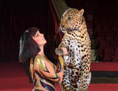 Принцессы цирка: самые бесстрашные укротительницы хищников