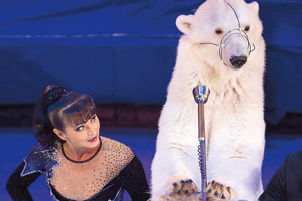 Медведи в труппе Денисенко – брошенные родителями или потерявшиеся