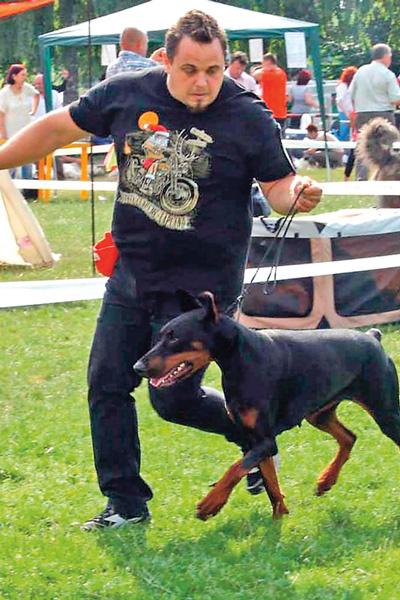 Овидиу разводит сторожевых и бойцовых собак